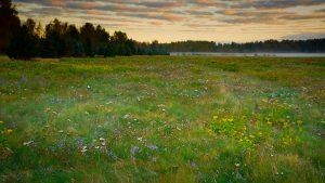 Malmin lentoaseman niittybiotooppi on nykyaikana harvinainen monipuolinen luontoparatiisi, jonka maisemallinen arvo koillisen Helsingin asukkaille on korvaamaton. Kuva: Petri Asikainen (18.9.2016)